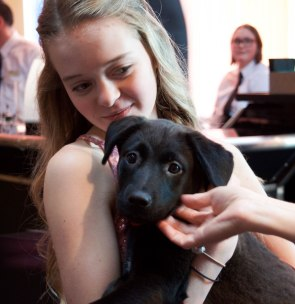 """A rescue puppy named Rizzo was for auction at the Rialzo Charity Gala hosted by Meridian Health Services in Muncie, Ind. on April 14, 2018. All proceeds from the auctions go to better care for addicted mothers and their newborn babies. Rialzo is Meridian Health Services' annual charity gala celebrating the harmony of """"whole-person"""" health. Photo by: Mallory Huxford"""