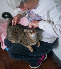 One of the cats in the free range cat room gets scratched and petted on April 13 at ARF. Breanna Daugherty | SFG